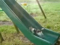 Watch Slide dm GIF on Gfycat. Discover more related GIFs on Gfycat
