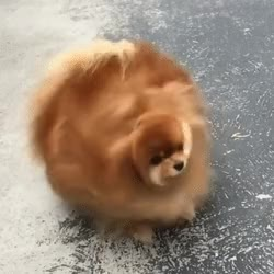Watch and share Cute Slow Motion GIF - GIFs by likkaon on Gfycat