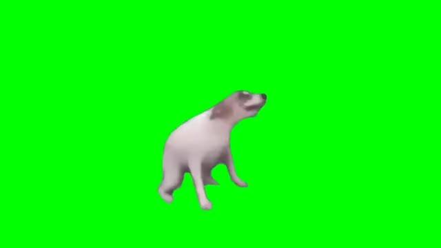 Watch Doggo Dancing GREEN SCREEN (DANCE TILL YOU'RE DEAD) GIF by Everybody90 (@everybody) on Gfycat. Discover more dog, doggo, dogo GIFs on Gfycat