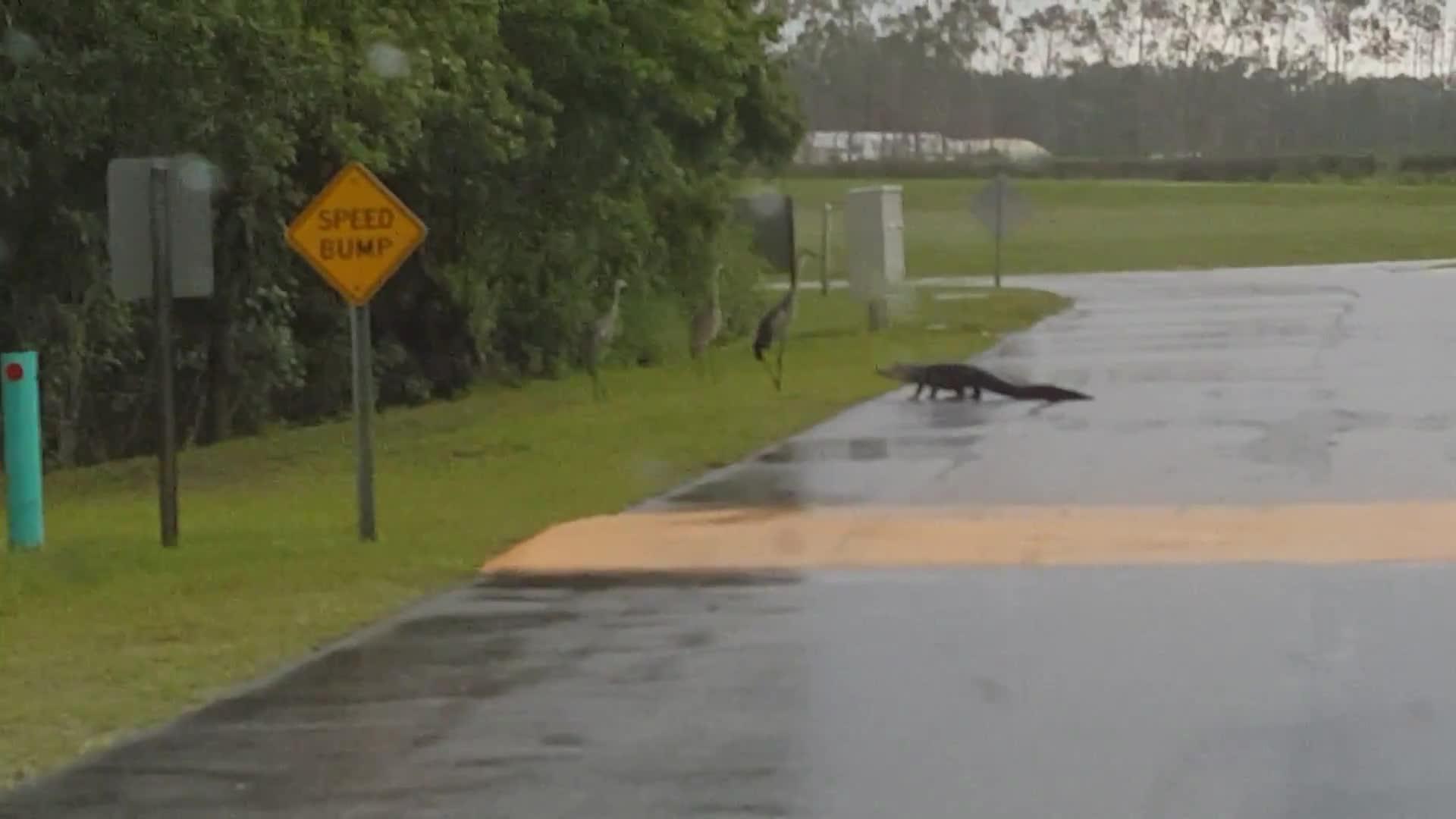 viralhog, Alligator Vs. Crane  GIFs