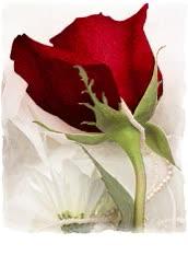 Watch and share Gifs De Flores E Borboletas Animadas Lindas! Flowers Gifs GIFs on Gfycat