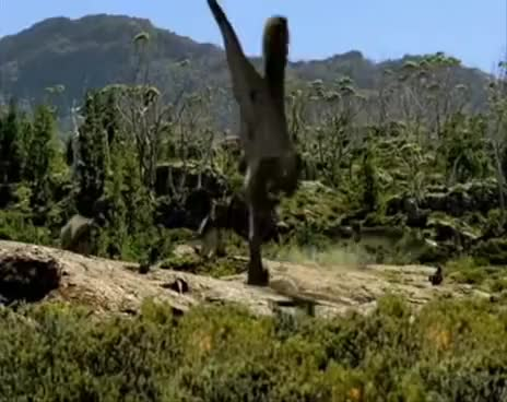 Watch and share Walking With Dinosaurs: Utahraptor GIFs on Gfycat