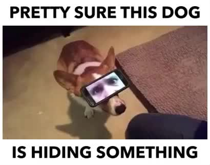 Watch Guilty doggo GIF by Dave (@scribetree) on Gfycat. Discover more GIF Brewery GIFs on Gfycat