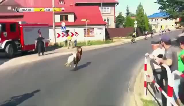 Polen Rundfahrt 2017 6. Etappe Pony
