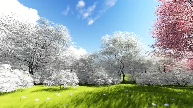 Spring Grass Field Video Background  Nature Video Background  GIF