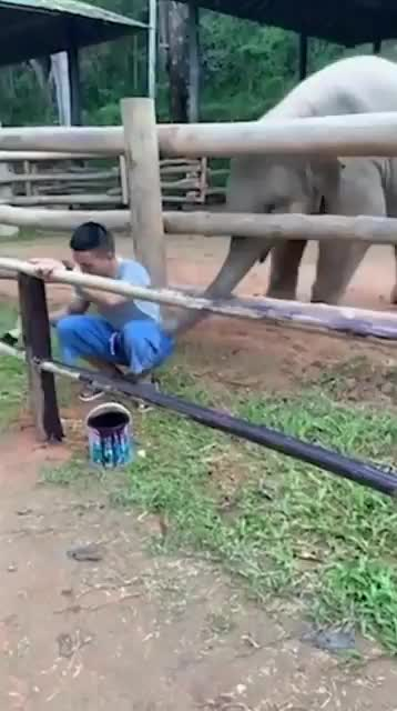 Watch and share Elephant GIFs and Cute GIFs by teistom on Gfycat