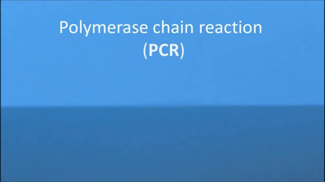 Watch and share Polymerase GIFs and Animation GIFs on Gfycat
