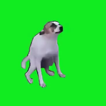 Watch and share Dance Till You're Dead - GREEN SCREEN -  Brasil Dancing Dog GIFs on Gfycat