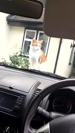 StartledCats, catpranks, Ok I'll get off the car ... *toot* ... I said ok! (reddit) GIFs