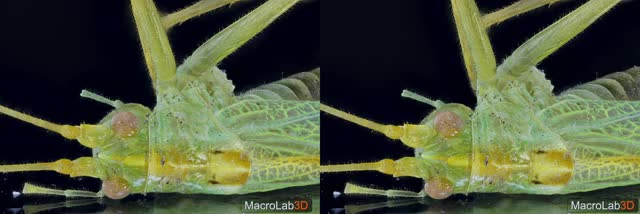 Watch and share Grasshopper GIFs and Macrolab3d GIFs by MacroLab3D on Gfycat