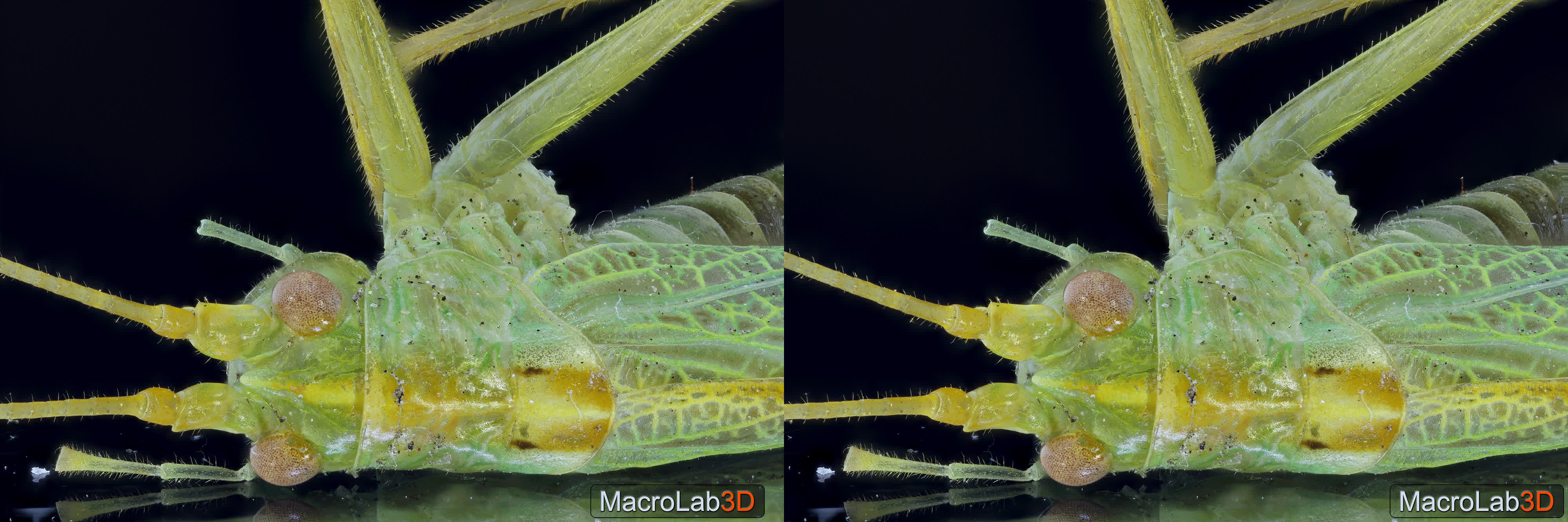 3D, Grasshopper, MacroLab3D, Decomposed Grasshopper under UV, Crossview 3D GIFs