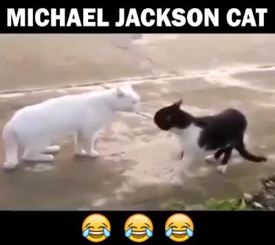 Watch Michael Jackson cat 😂😂😂 GIF by @boldfacebutton7 on Gfycat. Discover more related GIFs on Gfycat