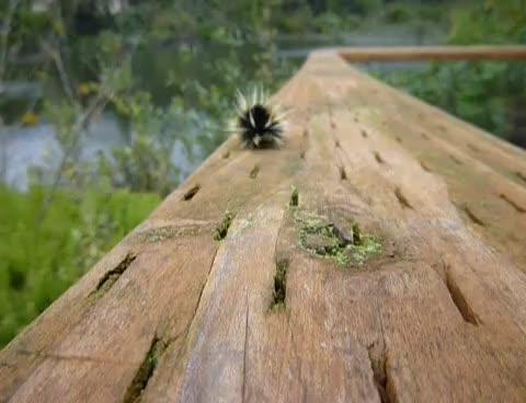 adorable, bug, caterpillar, crawl, cute, nature, Caterpillar Crawl GIFs
