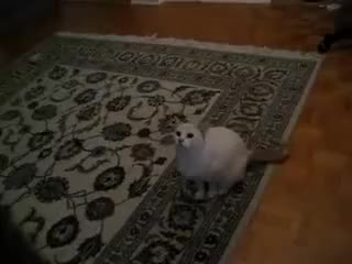 Watch and share Dancer GIFs and Cat GIFs on Gfycat