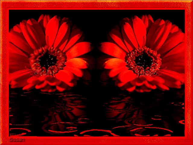Watch and share Gif Gotas De Agua GIFs and Gif Flores GIFs by Susan on Gfycat