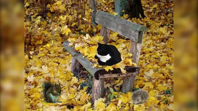 Watch and share Кошка, Белка И Ёжик GIFs by Татьяна on Gfycat