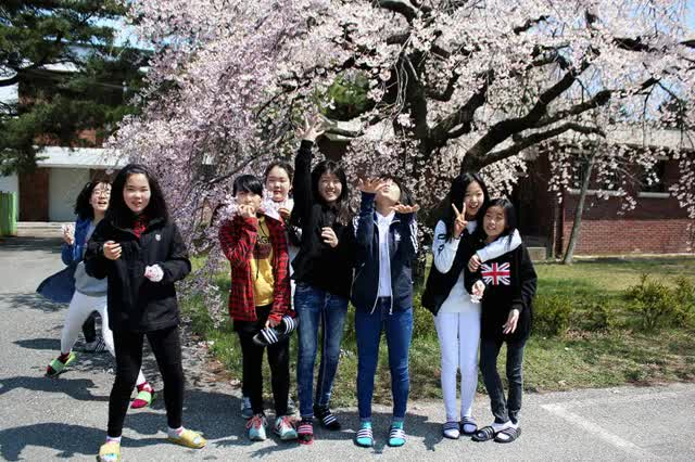 Watch Students with Cherry Blossoms GIF by @engedublog on Gfycat. Discover more Blossoms, Cherry, Students GIFs on Gfycat