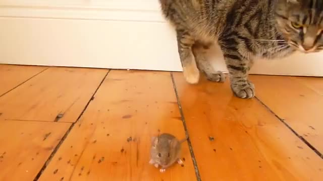 Watch and share /r/MouseGifs GIFs by cakejerry on Gfycat