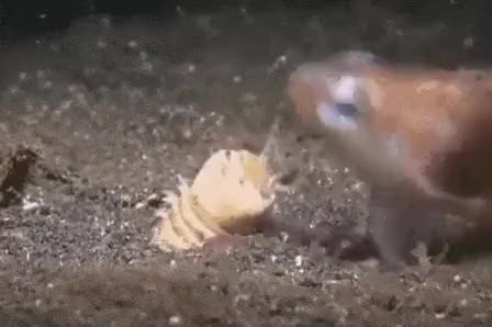 Watch and share Sarlacc GIFs by gorush on Gfycat