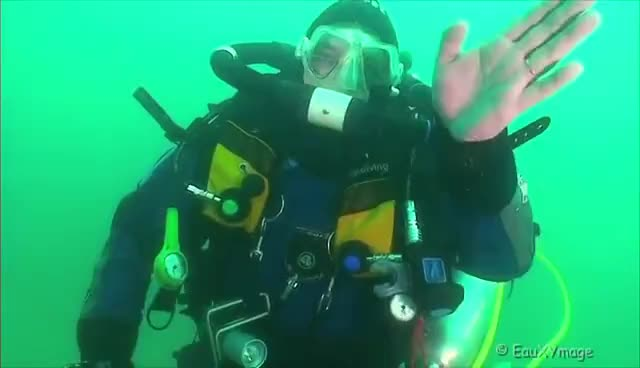 scuba diving, Papat GIFs