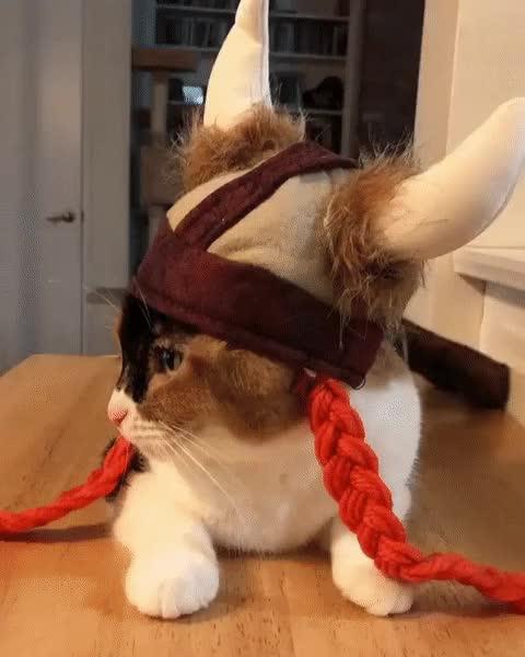 Watch and share True Viking GIFs on Gfycat