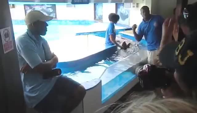 Watch and share Petting Shark GIFs and Travel Guide GIFs on Gfycat