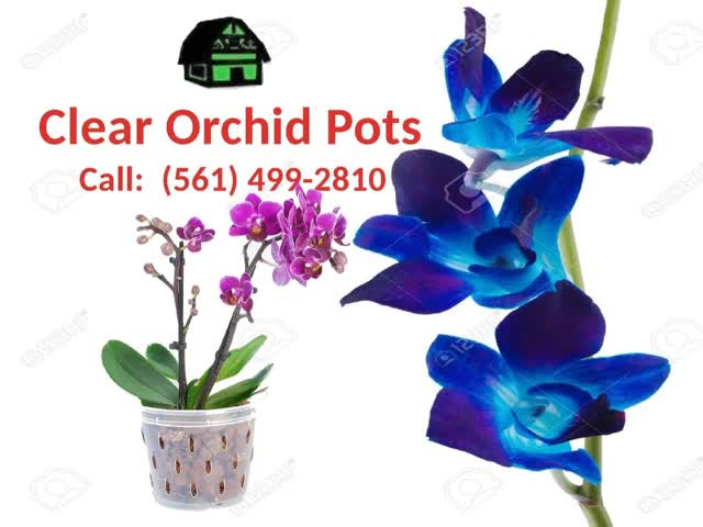 Watch and share Clear Orchid Pots GIFs and Clear Orchid Pot GIFs by greenbarnorchid on Gfycat