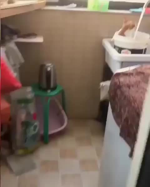 Watch and share Cat Takes A Spa Day GIFs by Boojibs on Gfycat