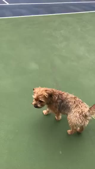 Watch this GIF on Gfycat. Discover more WhatsWrongWithYourDog, aww GIFs on Gfycat