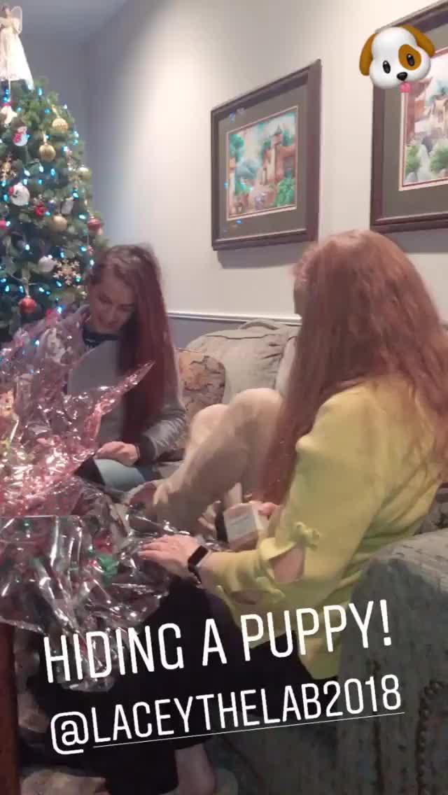 Watch and share Danieladibfitness 2018-12-26 09:09:48.077 GIFs by Pams Fruit Jam on Gfycat