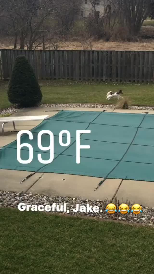 Watch and share Rarepuppers GIFs and Zoomies GIFs on Gfycat