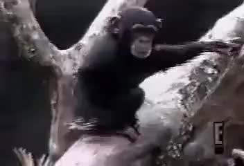 Watch and share Monkeys Absturz GIFs by ruggyy on Gfycat
