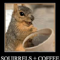 Watch and share Funny Squirrels Gif Photo: Squirrels AnimalslolFunnySquirrelCaptionAnima.gif GIFs on Gfycat