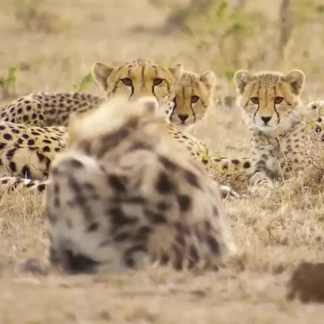 Watch Video by natgeowild GIF by @awkwardtheturtle on Gfycat. Discover more awkwardtheturtle GIFs on Gfycat