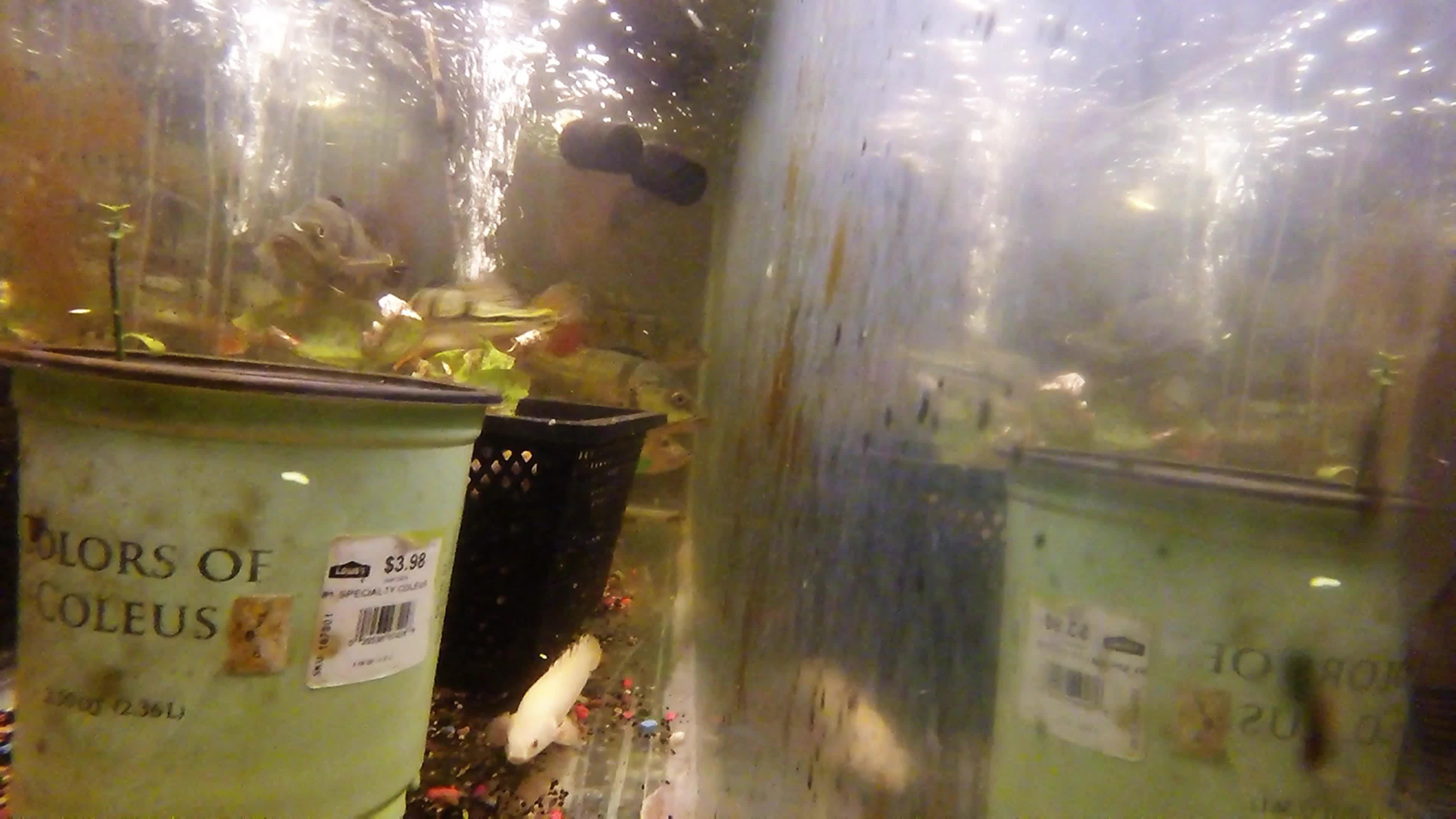 MonsterFishKeepers, monsterfishkeepers,  GIFs