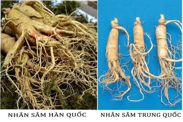 Watch and share Phân Biệt Nhân Sâm GIFs by Nguyễn Hà on Gfycat