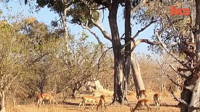 Watch and share Botswana GIFs and Wildlife GIFs on Gfycat
