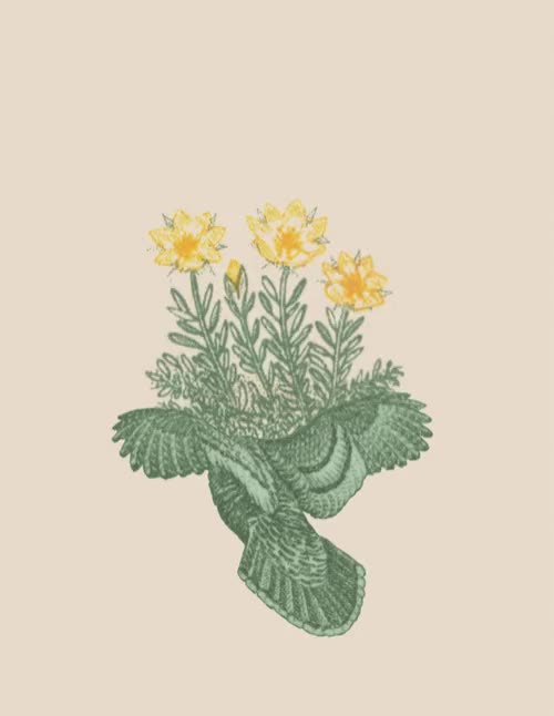 Watch this flowers GIF by The GIF Smith (@sannahparker) on Gfycat. Discover more animation, flowers, trevor anderson GIFs on Gfycat