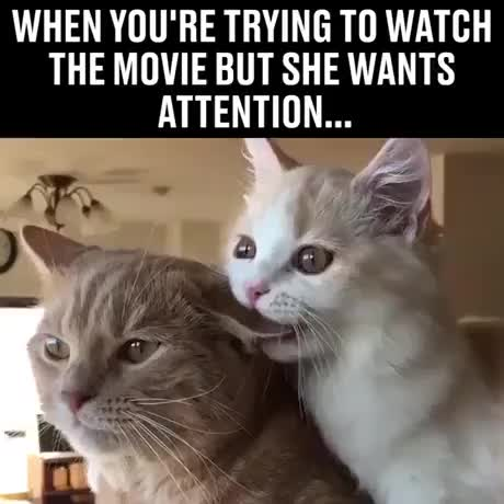 Watch and share Catto Need Attention GIFs by Gif-vif.com on Gfycat