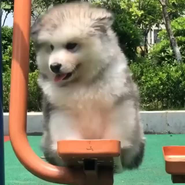 Watch Swinging GIF by JustViral.Net (@justviralnet) on Gfycat. Discover more Cute, puppy GIFs on Gfycat