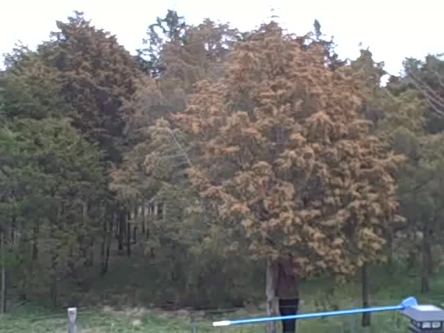 Watch Massive tree pollen explosion GIF by Jackson3OH3 (@jackson3oh3) on Gfycat. Discover more lewisburg, pollen, spring GIFs on Gfycat