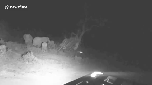 Watch and share Elephant Knocks Over Tree GIFs by thegreathsuster on Gfycat