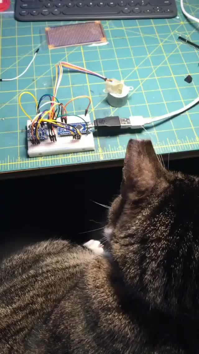 Watch Arduino Stepper Motor Test GIF by @janununuh on Gfycat. Discover more Arduino, cat, diy, electronics, stepper GIFs on Gfycat