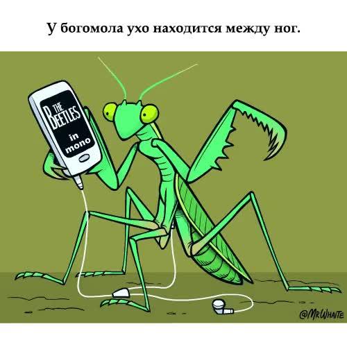 Watch and share Вся Правда О Богомолах GIFs on Gfycat