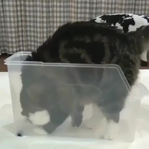 cat, aww, funny, Cat getting comfy GIFs