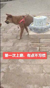 Watch and share Chad GIFs by dzdtwe on Gfycat