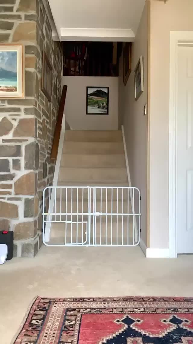 Watch and share Stairs GIFs and Funny GIFs by agedcheese on Gfycat