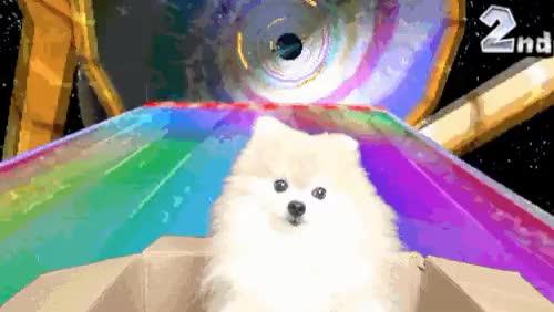 Watch this GIF on Gfycat. Discover more dog, haha, hehe, mario cart, pomeranian, rainbow, rainbow road GIFs on Gfycat