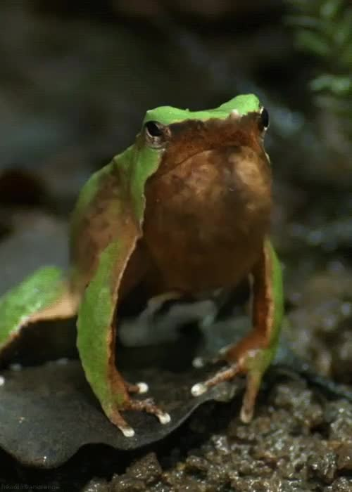 Watch and share Totally Sick Frog Gifs, Bro GIFs on Gfycat