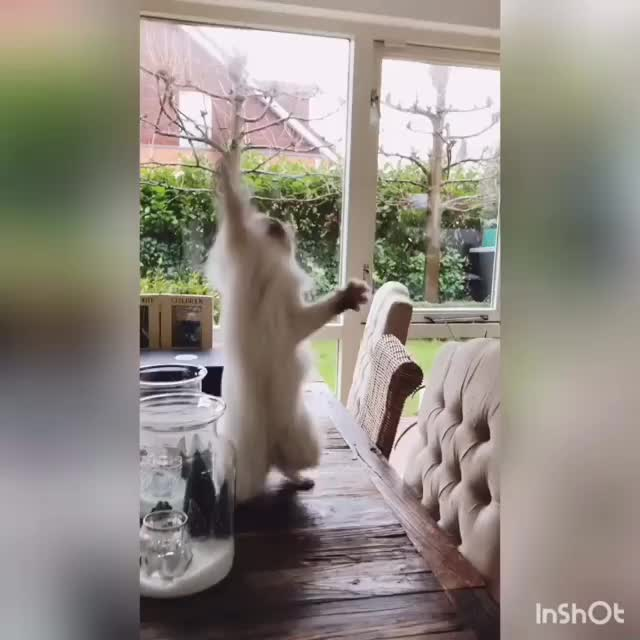 Mime cat GIFs